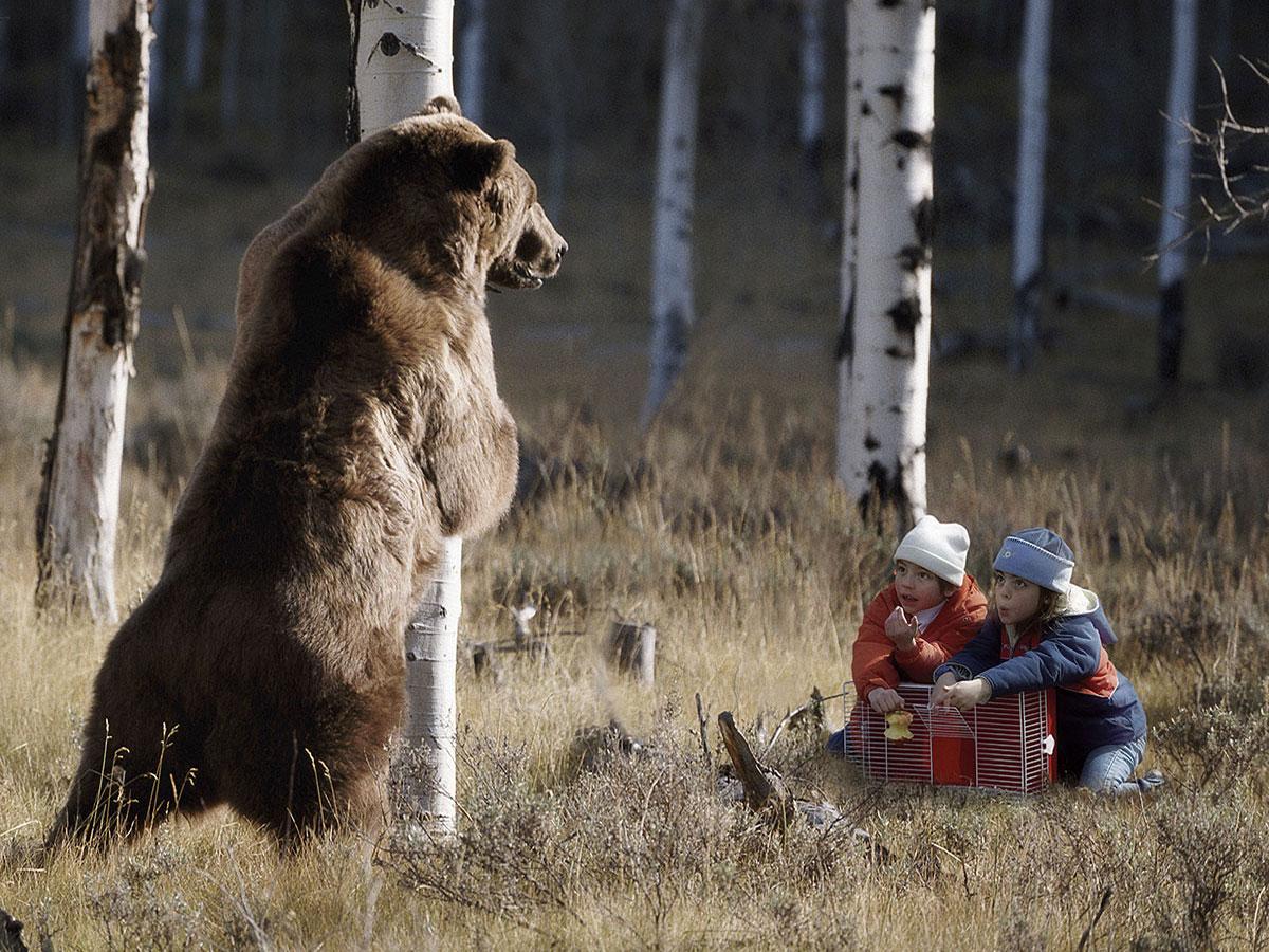 Как медведю не везет все встречают новый год автор