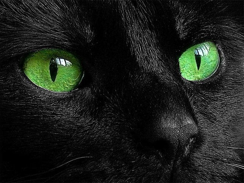 Картинка черная кошка с зелеными глазами