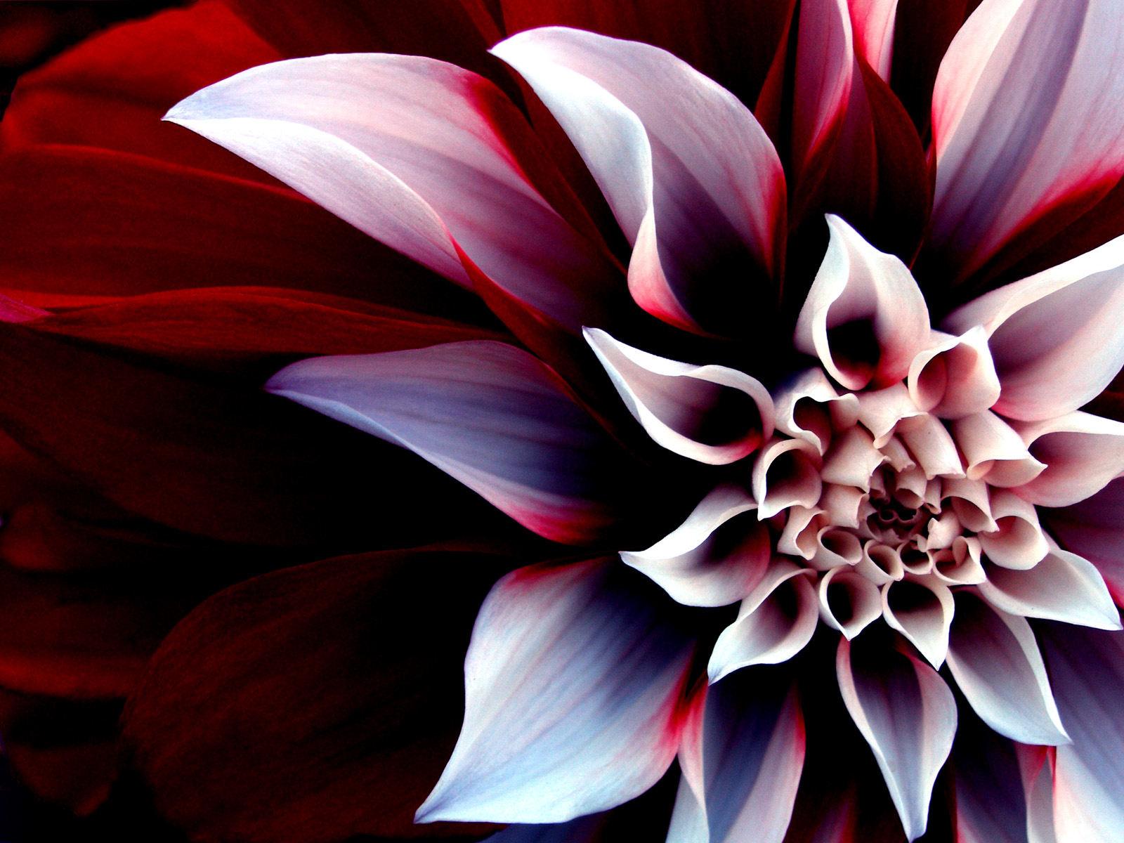 кухню самые красивые картинки про цветы сам