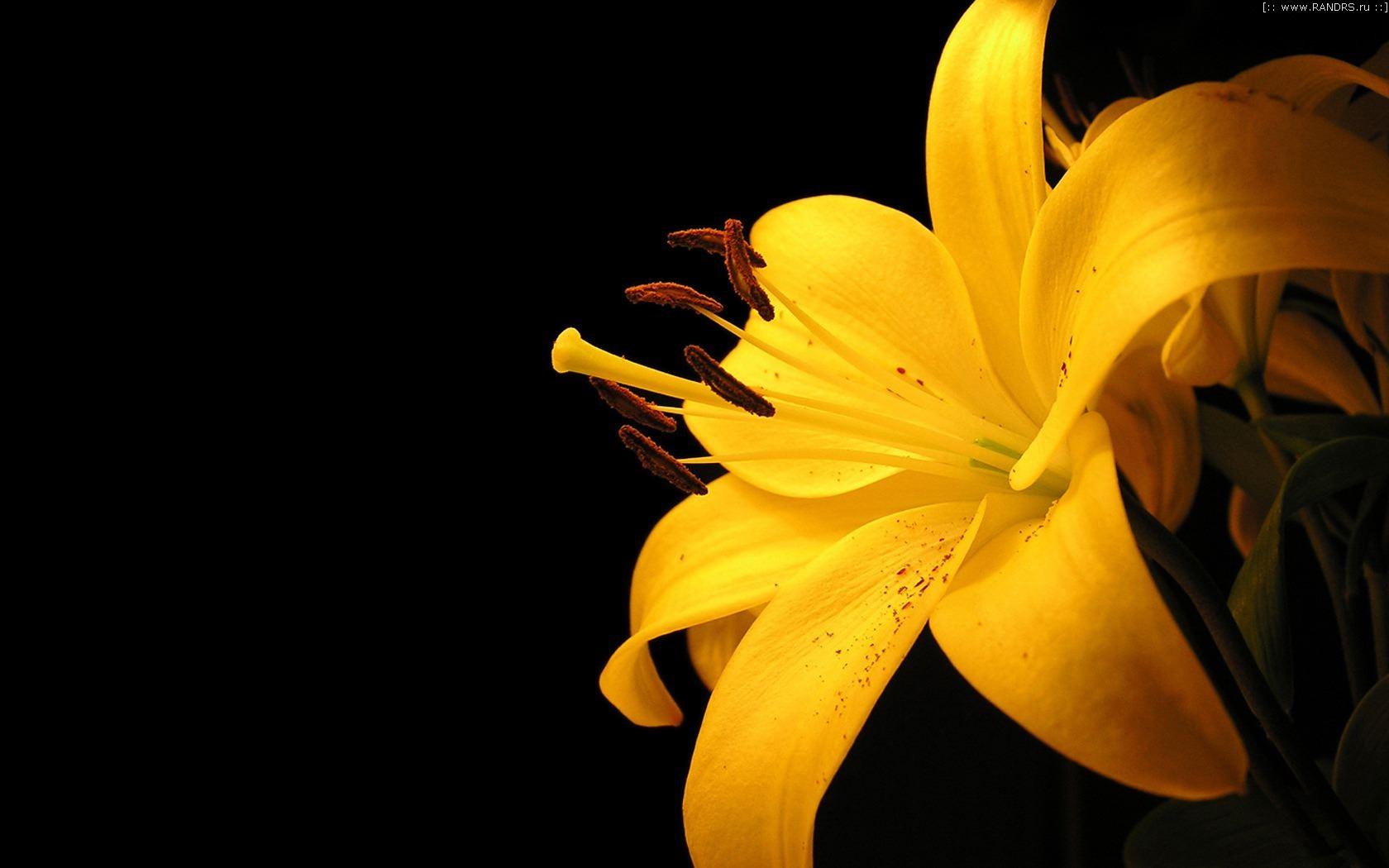 Картинки желтое на черном фоне