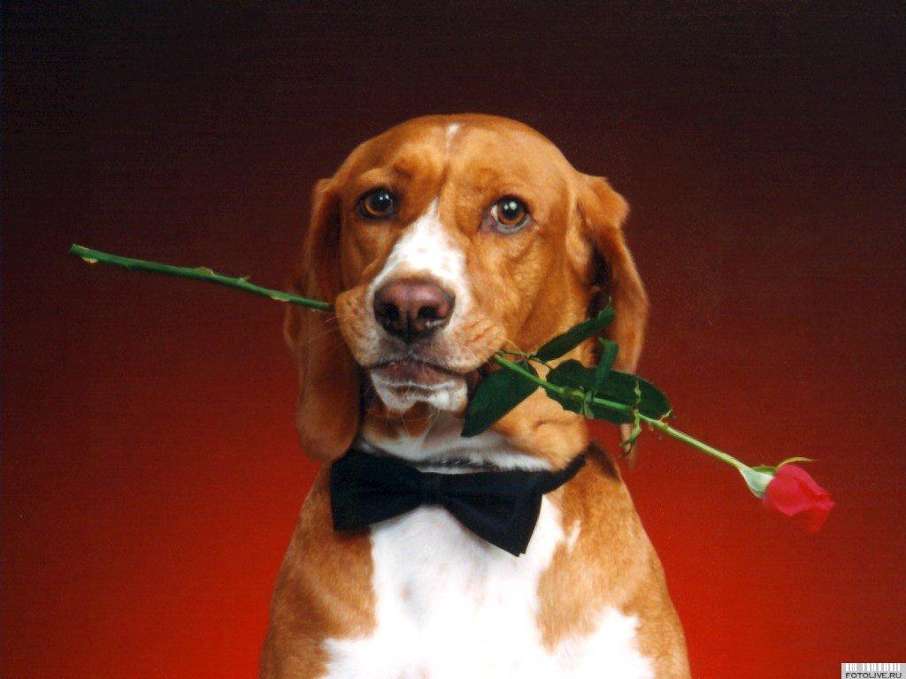Поздравительная открытка собака, надписи аву контакте