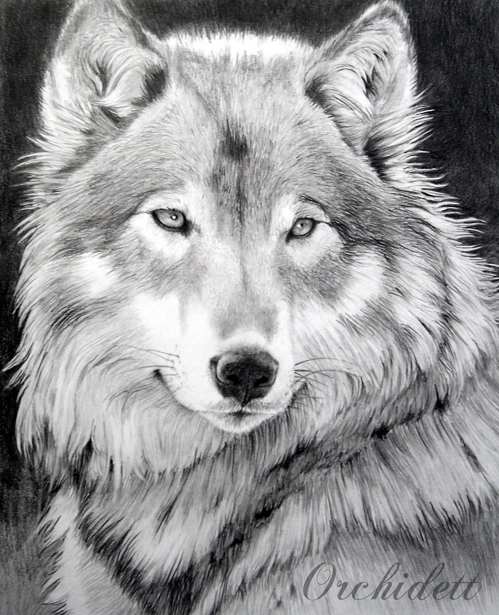 Рисунок с волками, мультфильмов гифы праздником