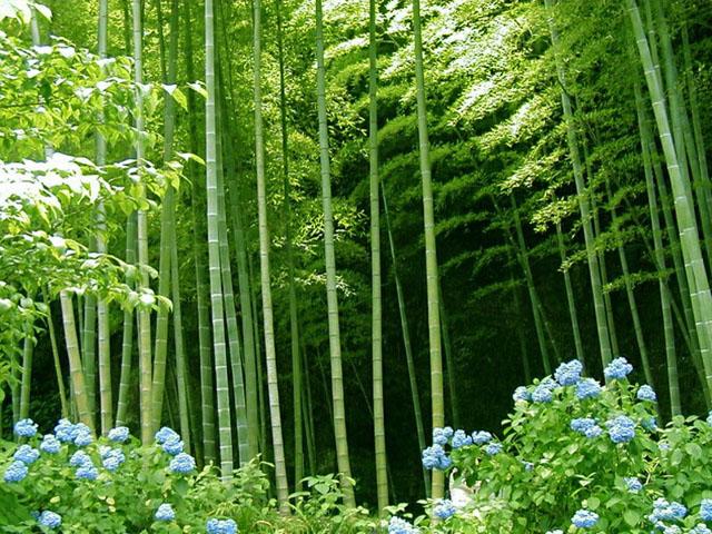 фото растений высокое качество