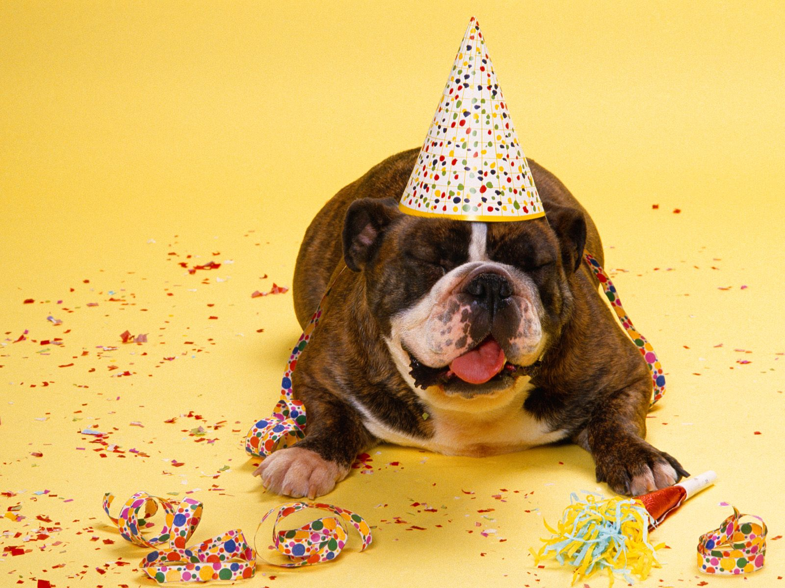 Фото поздравления с днём рождения с животными