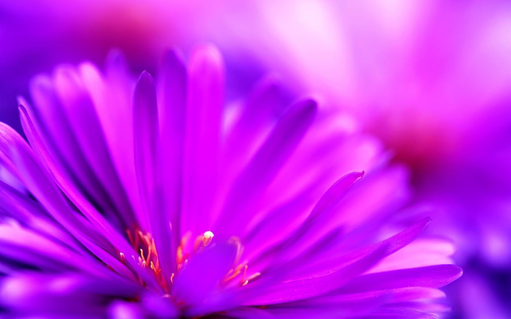 сайдинг картинки лиловый фиолетовый изделиях