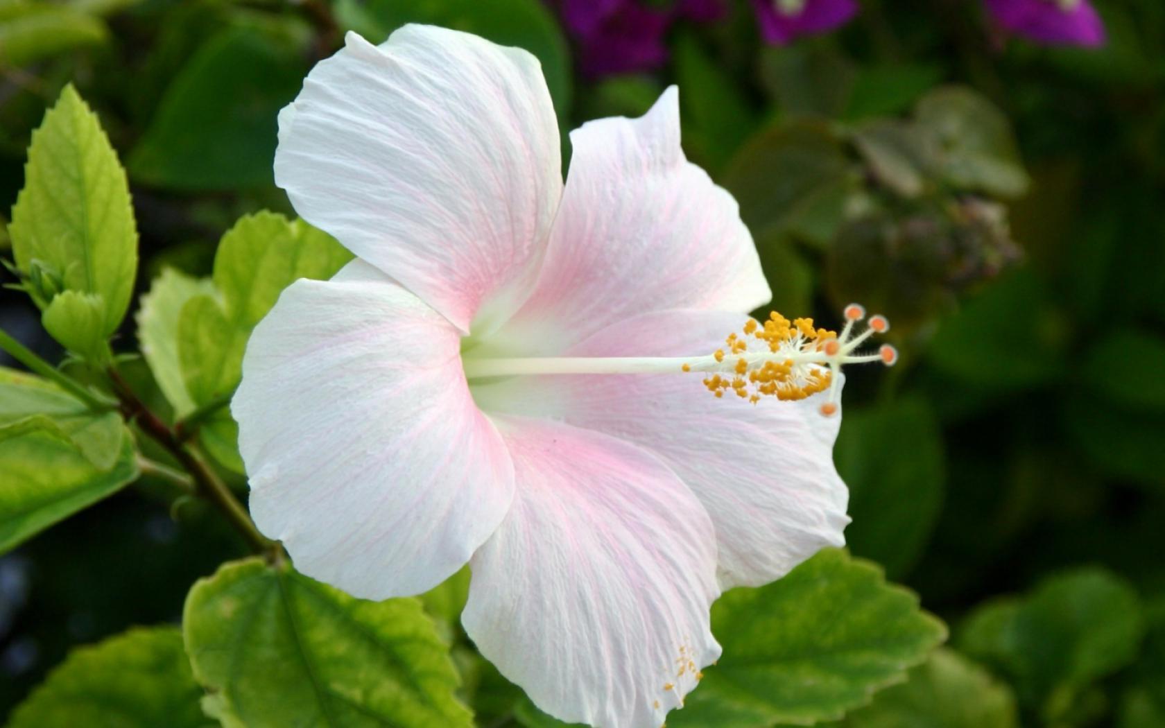 Виды цветущих цветов фото