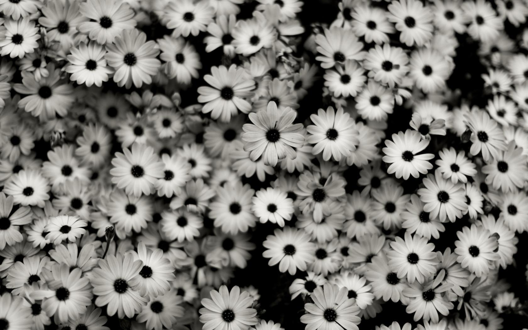 Картинки На Рабочий Стол Черно Белые Любовь
