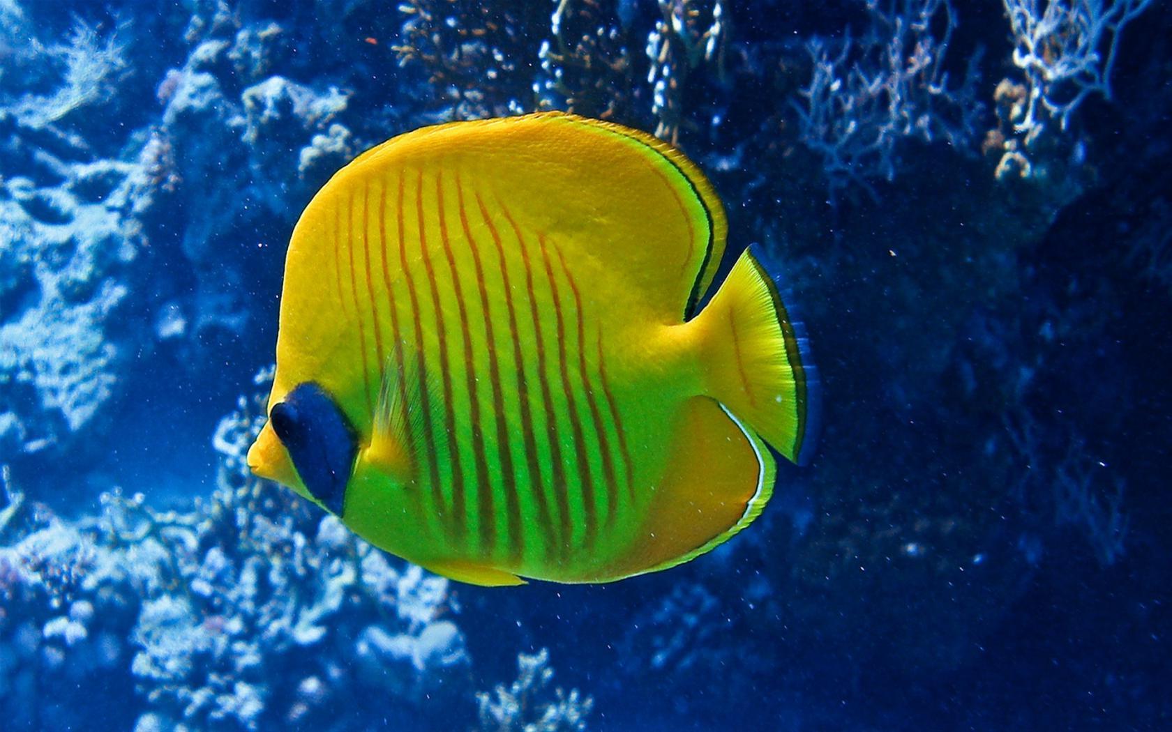получить красивые картинки как в реальной жизни выглядит океан с рыбами что