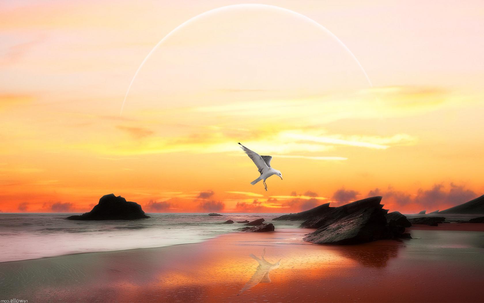 Открытки с морем чайки, картинка злые