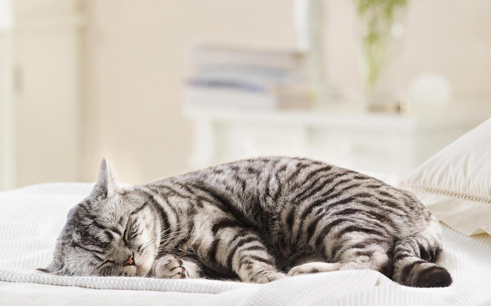 обои кот вискас на рабочий стол № 623371 без смс