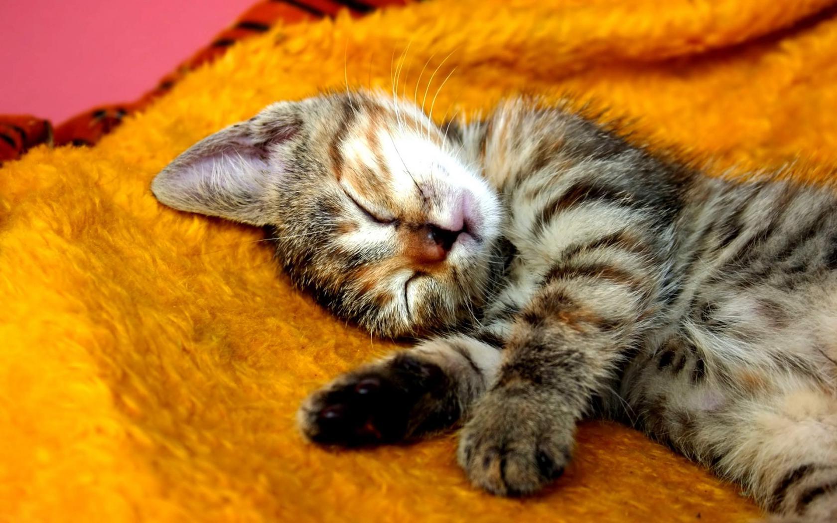 Идеи фотографий со спящим мужем продаже