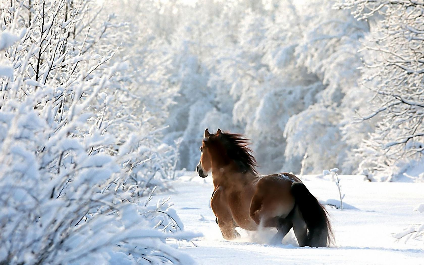 Обои на рабочий стол зимние лошади
